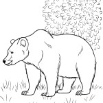 раскраски лесные звери, животные раскраски