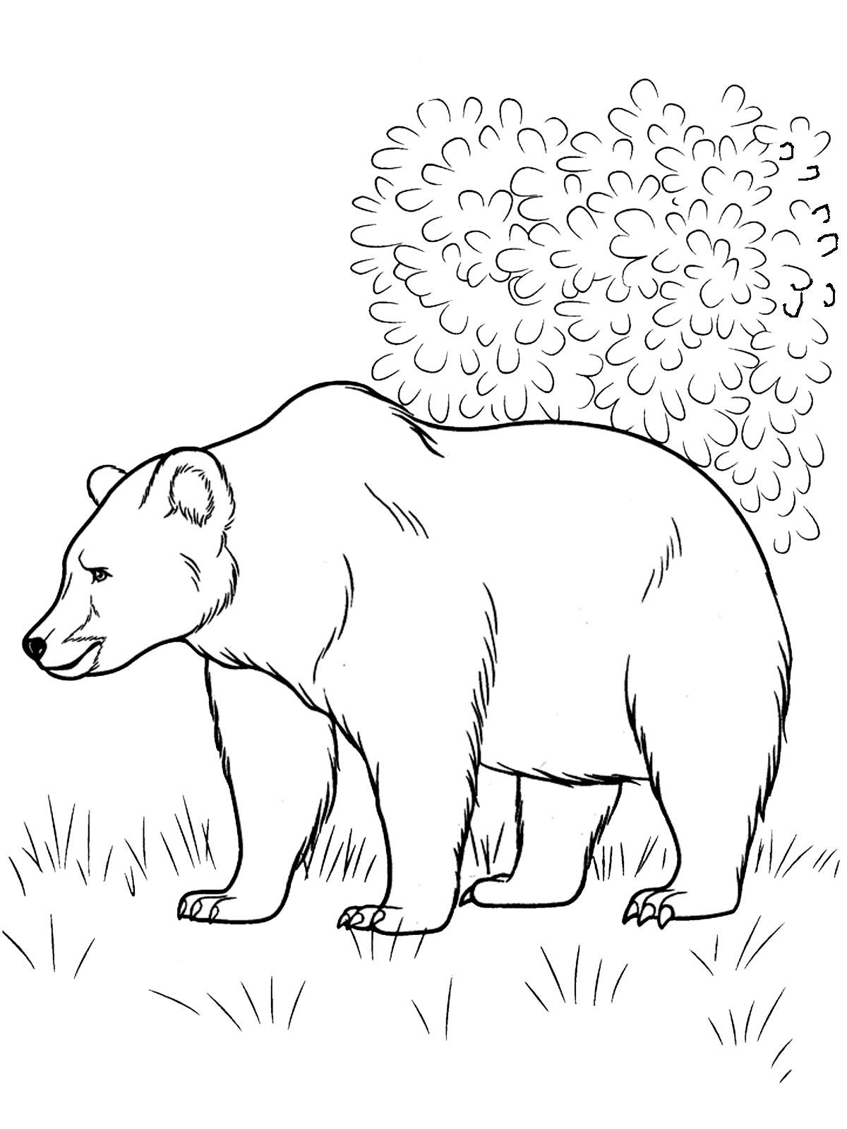 Раскраски животные наших лесов