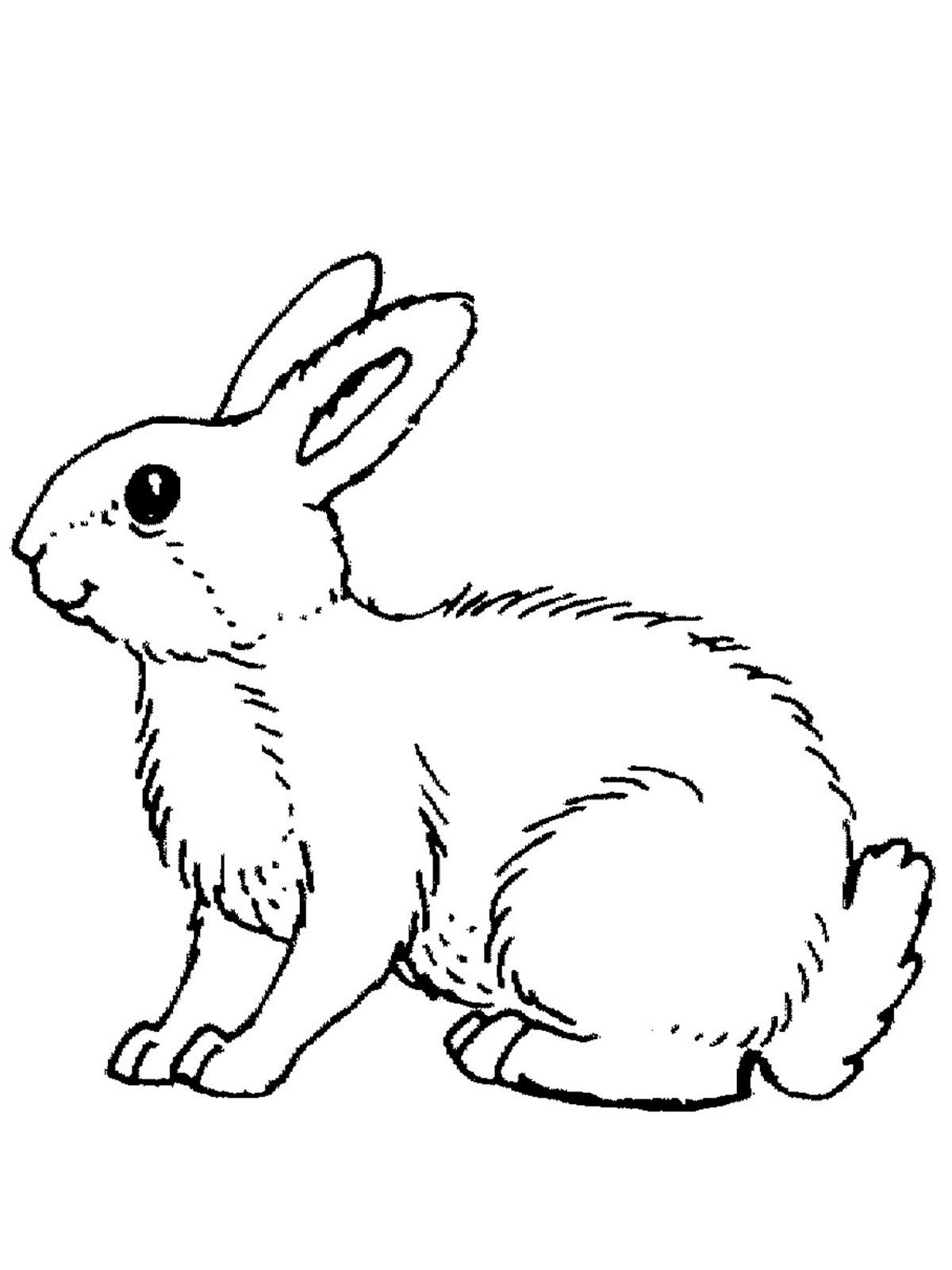 Раскраски животные зайцев