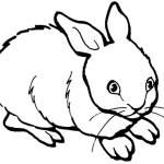 раскраски кролики