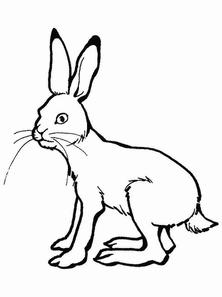 Заяц в лесу раскраска