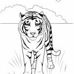 раскраски дикие животные, раскраски животные жарких стран