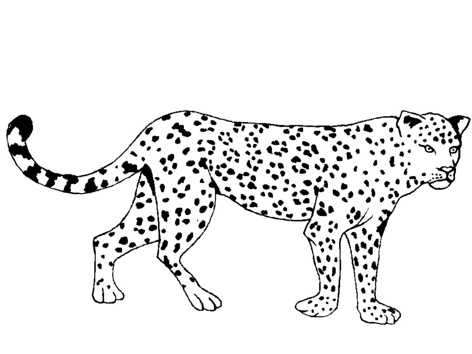 раскраски животные жарких стран скачать распечатать