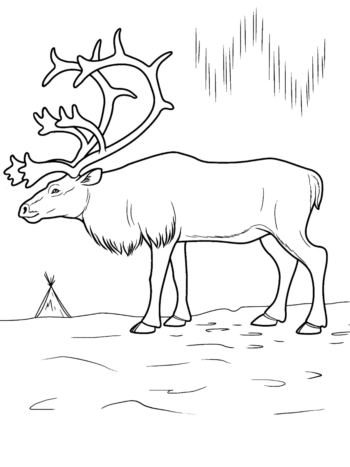 tundra animals coloring pages - photo#5