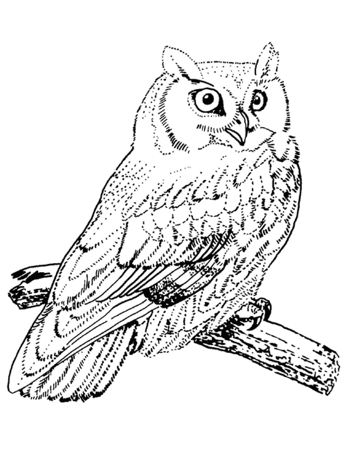 раскраски с животными птицами птицы раскраски с животными