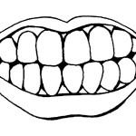 раскраска тело человека, раскраска зубы