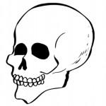 раскраска тело человека, раскраска череп