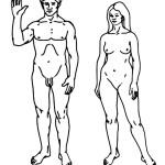 раскраска тело человека