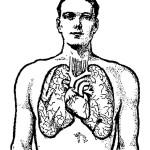 раскраска тело человека, раскраска легкое