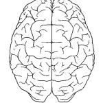 раскраска тело человека, раскраска мозг