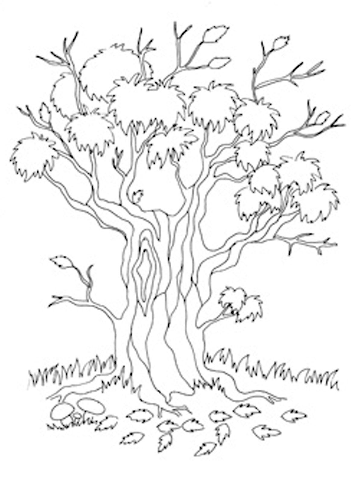 Раскраски деревья и кустарники. Скачать. Распечатать