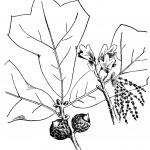 раскраски времена года, раскраски листья