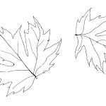 раскраски времена года, раскраски листья, раскраски осень