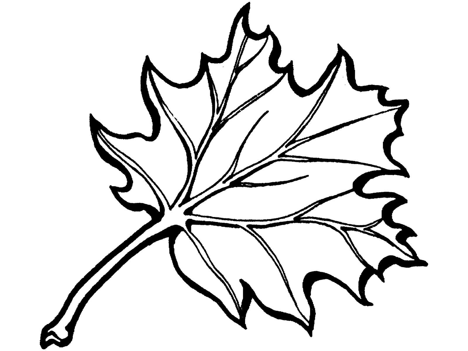 Раскраски листья. Скачать. Распечатать