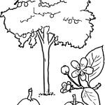 раскраска деревья