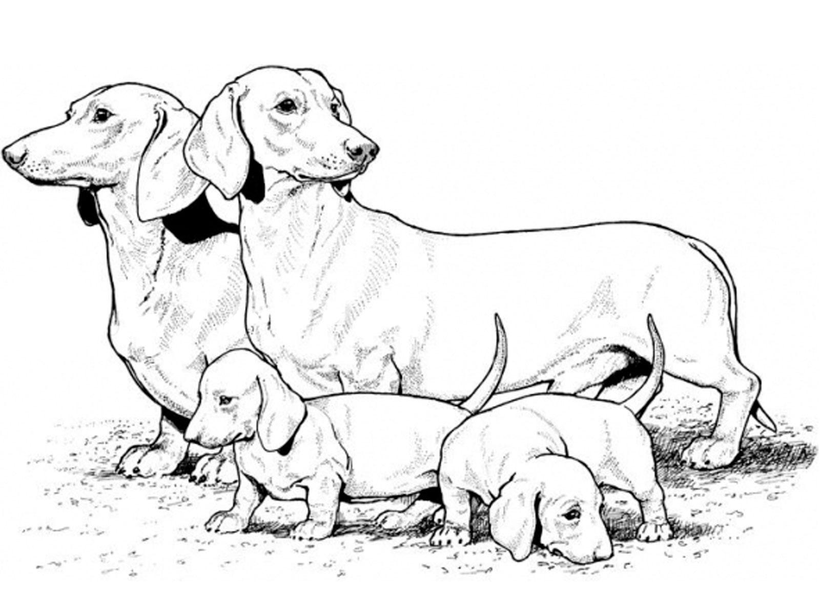 Раскраска про собак игры