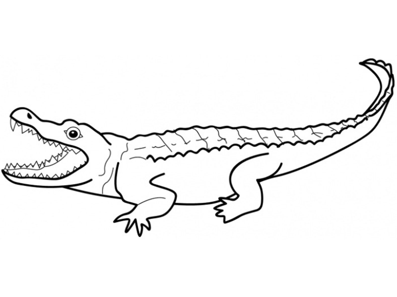coloring pages for reptiles alligators - photo#19
