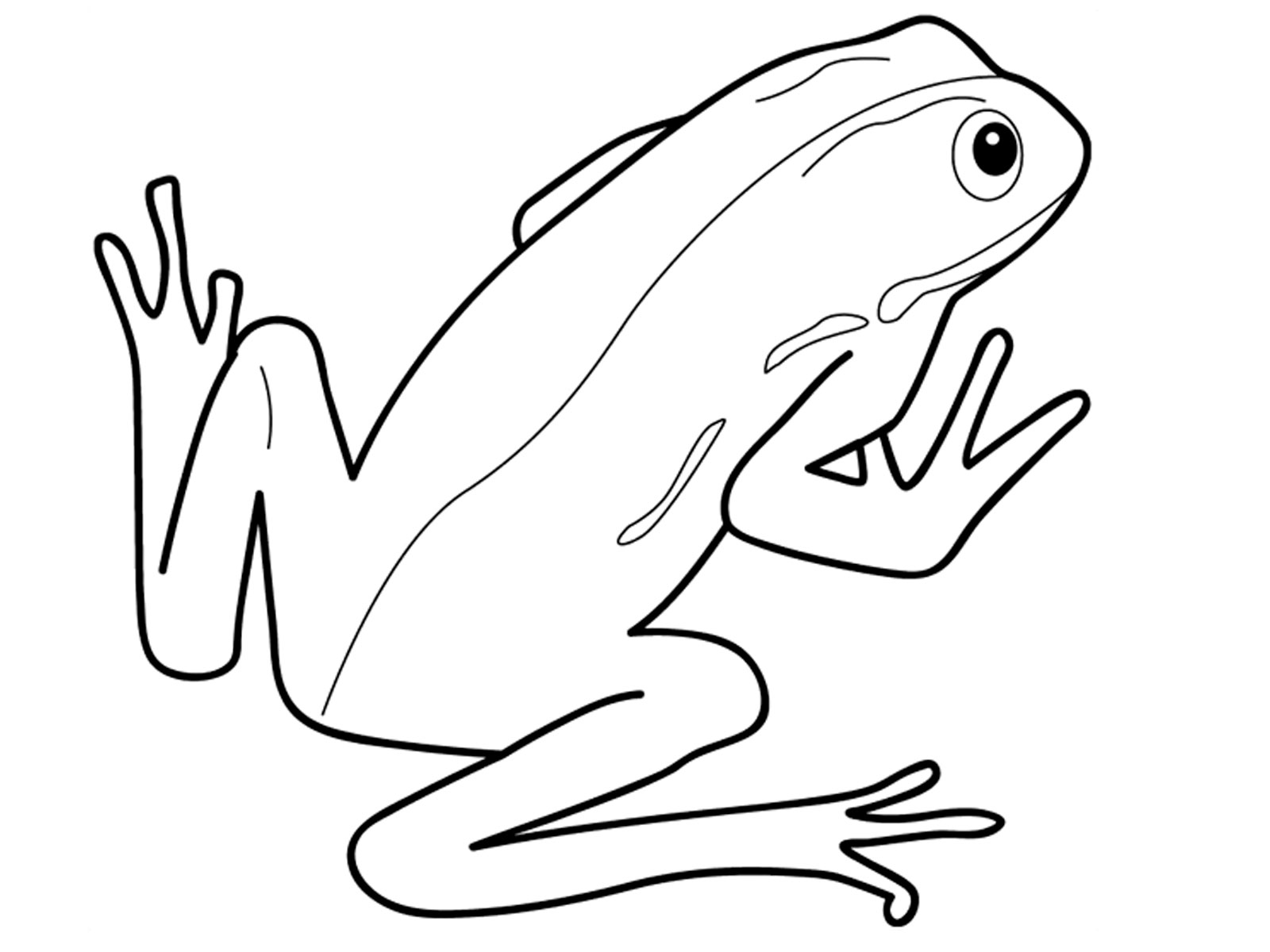 Free Coloring Pages Of Hibians Reptiles Coloring Pages