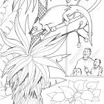 раскраски рептилий, раскраски земноводных