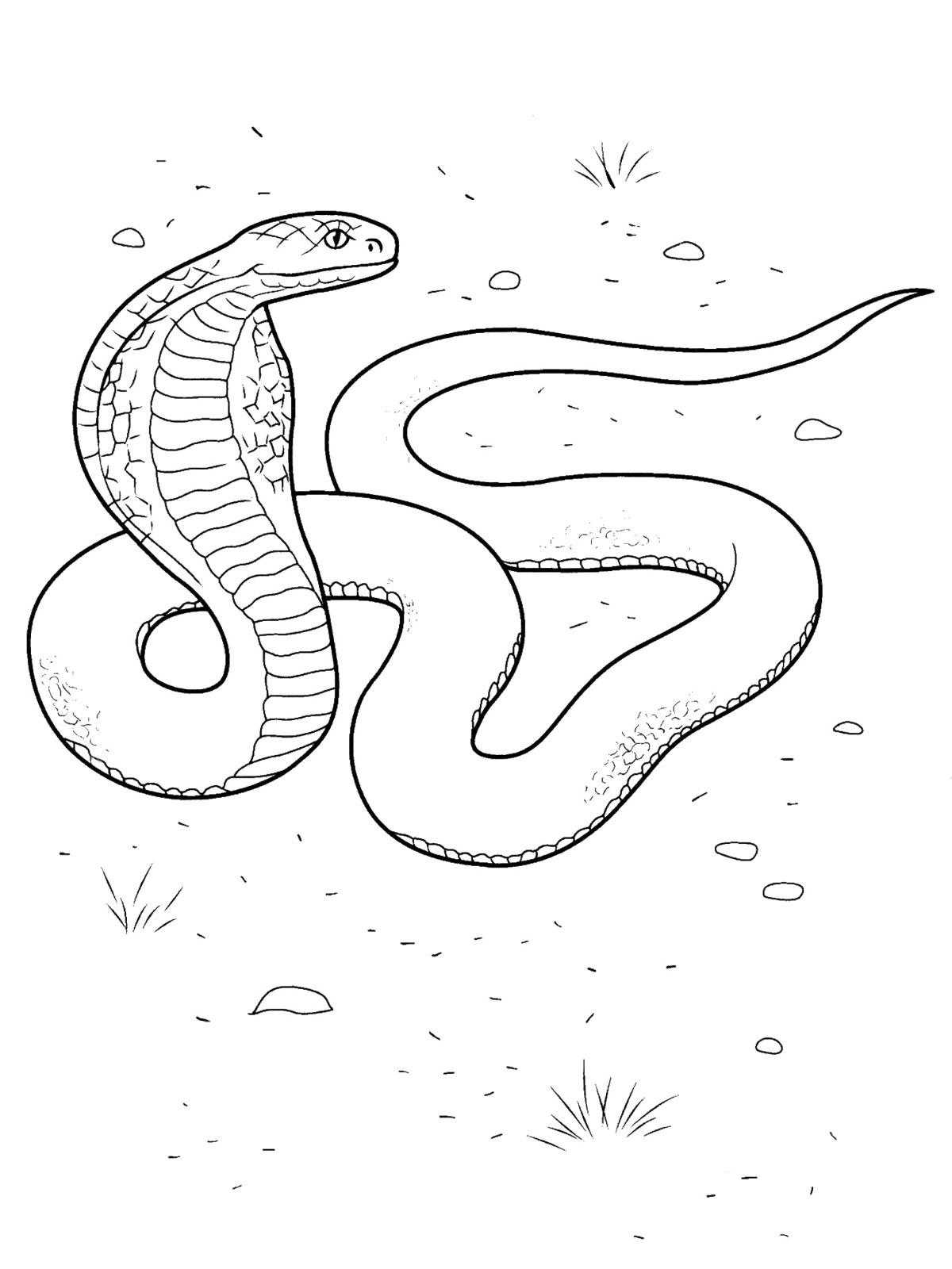 Рептилии раскраски