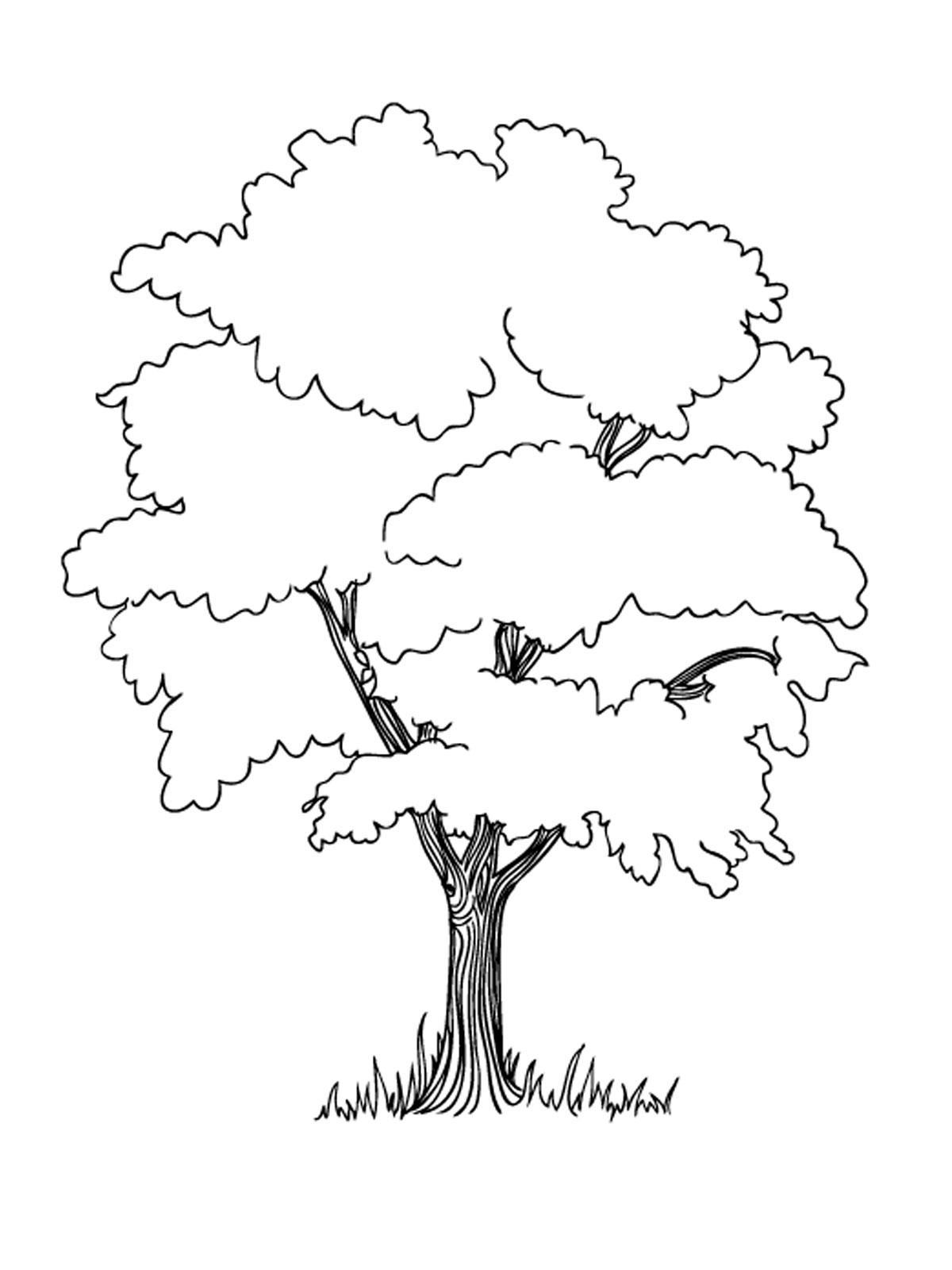 Раскраски деревья и кустарники Скачать Распечатать