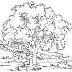 Раскраски деревья