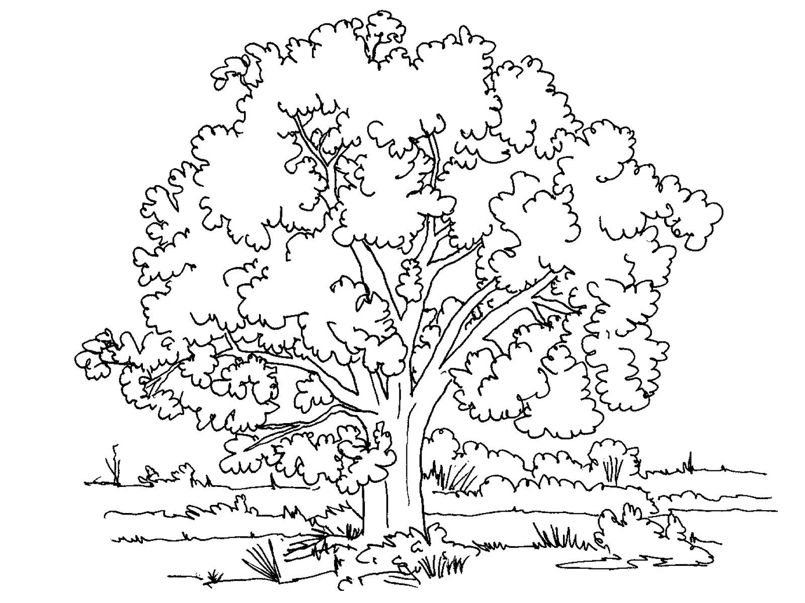 Раскраска детям осень