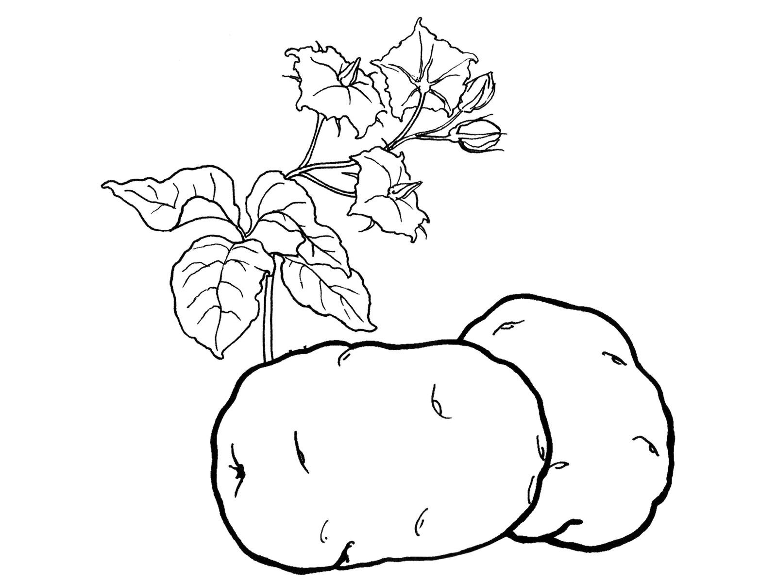 Фрукты овощи как раскраски