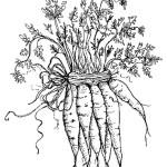 раскраски морковь