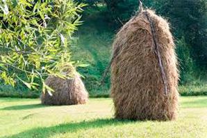 Была трава, Яков Тайц