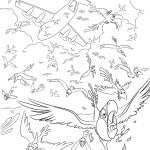 раскраска рио