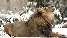 зоопарк зимой