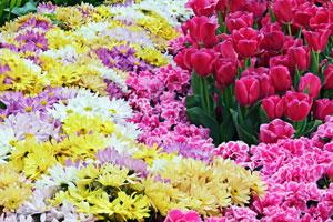 легенды, цветы