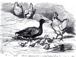 Гадкий утенок, Le vilain petit canard