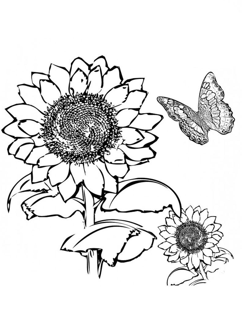 раскраска подсолнух, раскраска цветок