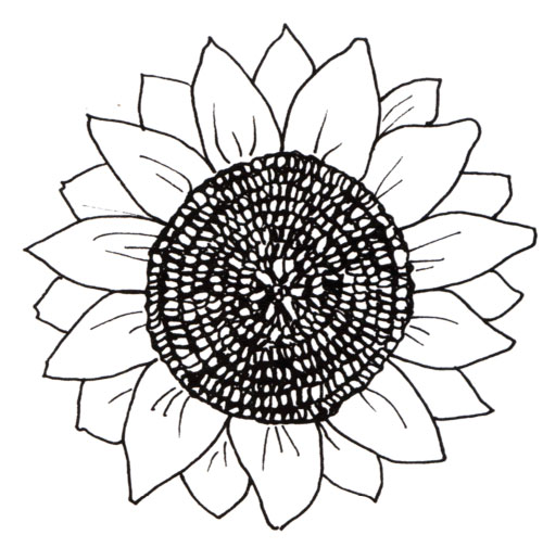 big sunflower coloring pages - photo#5